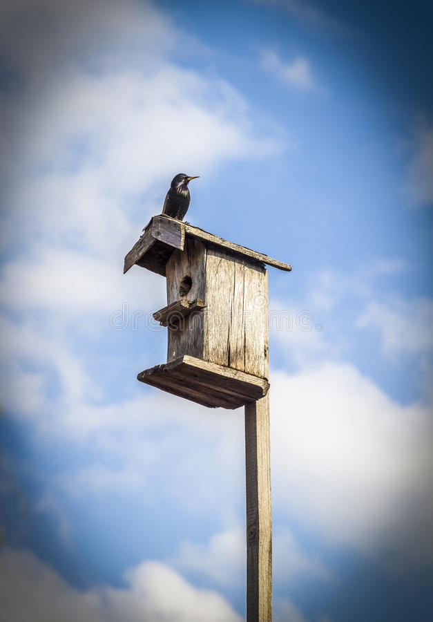 Download Birdhouse on a stick stock image. Image of container - 96310835