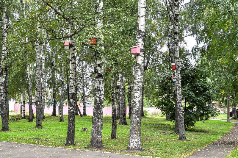 Birdhouse su un albero fotografia stock
