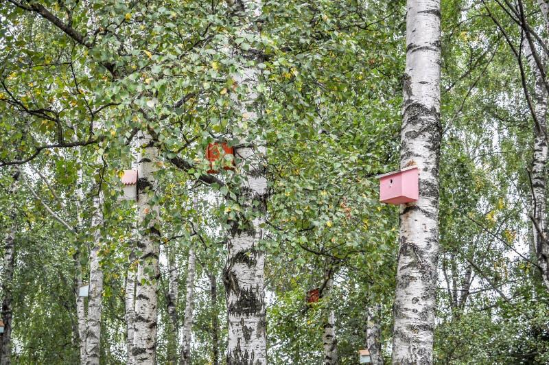 Birdhouse su un albero fotografie stock libere da diritti