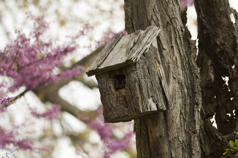Birdhouse sur un vieil arbre photo libre de droits