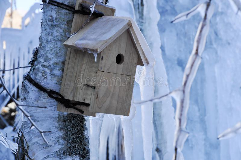 Birdhouse on a tree in winter royalty free stock image