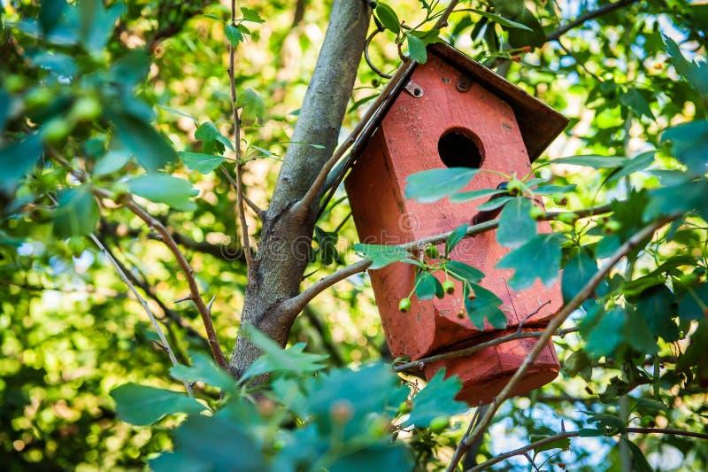 Birdhouse w drzewie fotografia royalty free