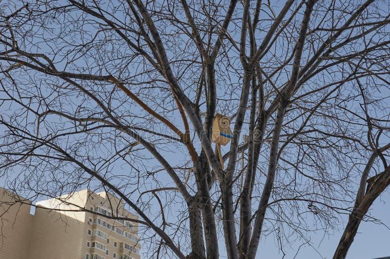Birdhouse w drzewie obrazy stock