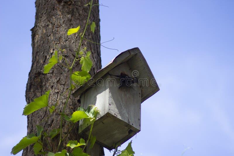 Birdhouse z kurczątkami w lesie w lecie zdjęcia royalty free