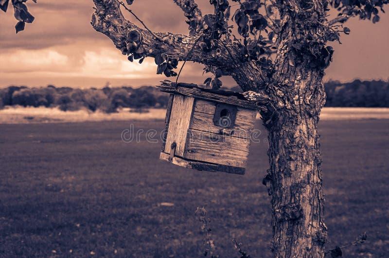 Birdhouse z romantycznym spojrzeniem fotografia royalty free