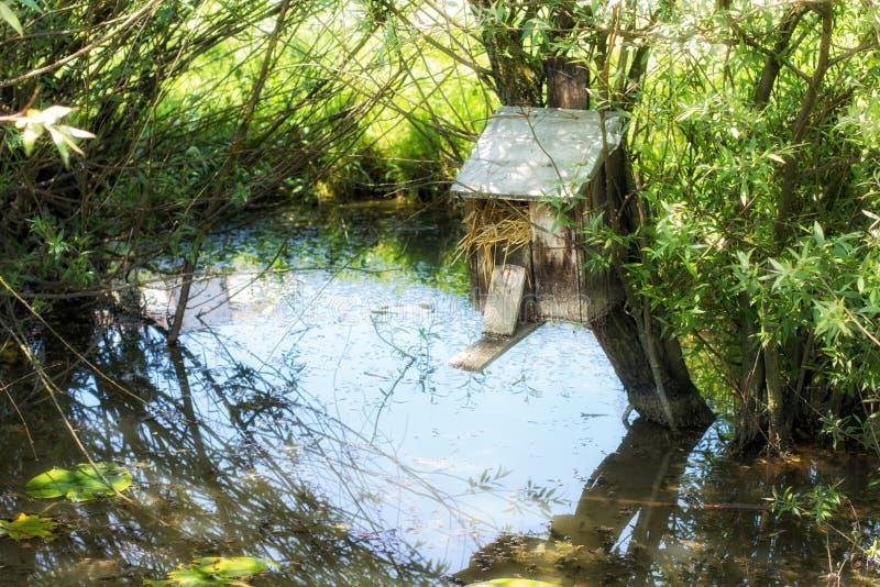 Birdhouses в болоте стоковые изображения rf
