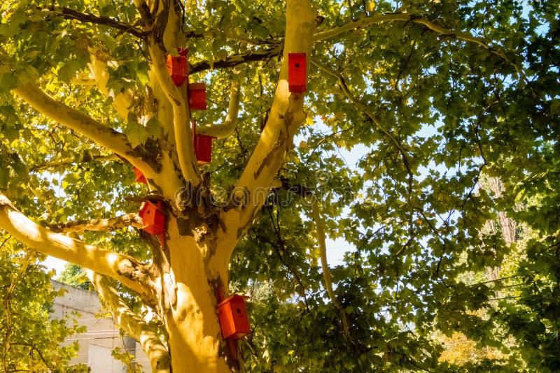 Birdhouses на дереве Красивое дерево Platan и много оранжевый birdhouse стоковое фото rf