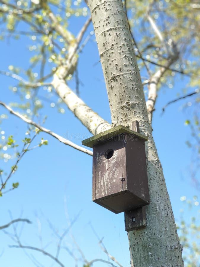 birdhouses на дереве тополя стоковые фотографии rf