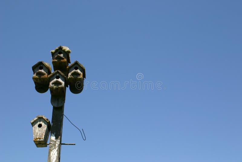 Birdhouses неба дневного времени стоковые изображения rf