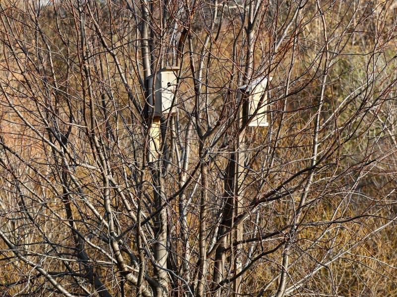 birdhouses stock fotografie