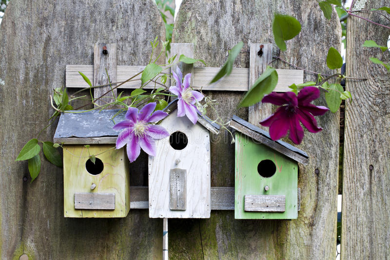 birdhouses fäktar trägammala tre arkivbilder