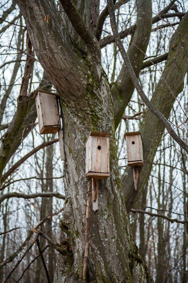 birdhouses photos stock
