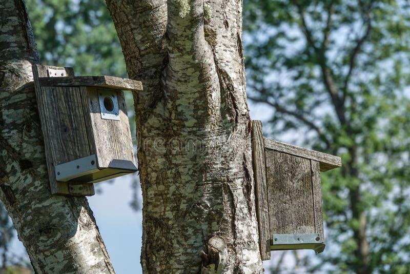 birdhouses Nestkastje op bomen royalty-vrije stock foto
