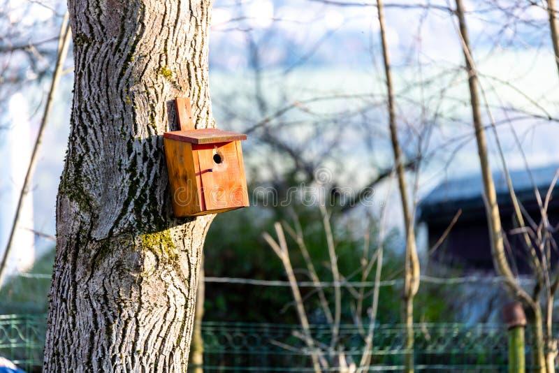 Birdhousing dans accrocher brun sur un arbre en premier ressort photos stock