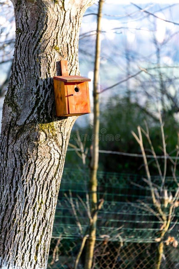 Birdhousing dans accrocher brun sur un arbre en premier ressort photographie stock libre de droits