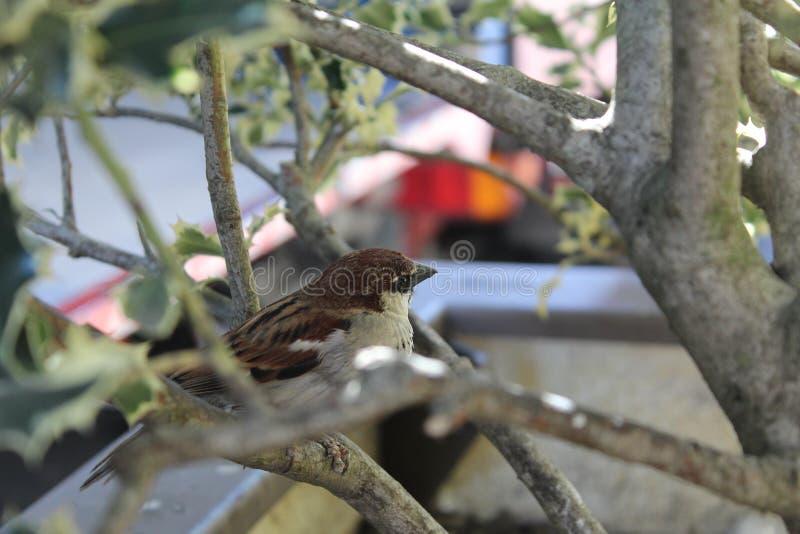 Birdie στο δέντρο στοκ φωτογραφίες