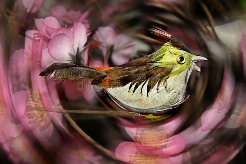 Download Birdie stock photo. Image of doll, bird, asian, decoration - 1767590