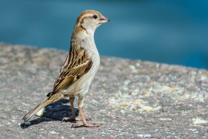 birdie royalty-vrije stock foto's
