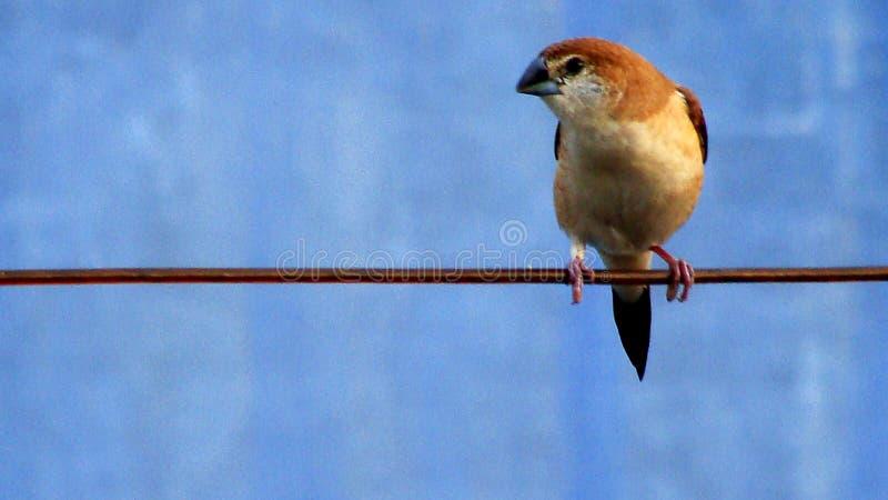 birdie stock afbeelding