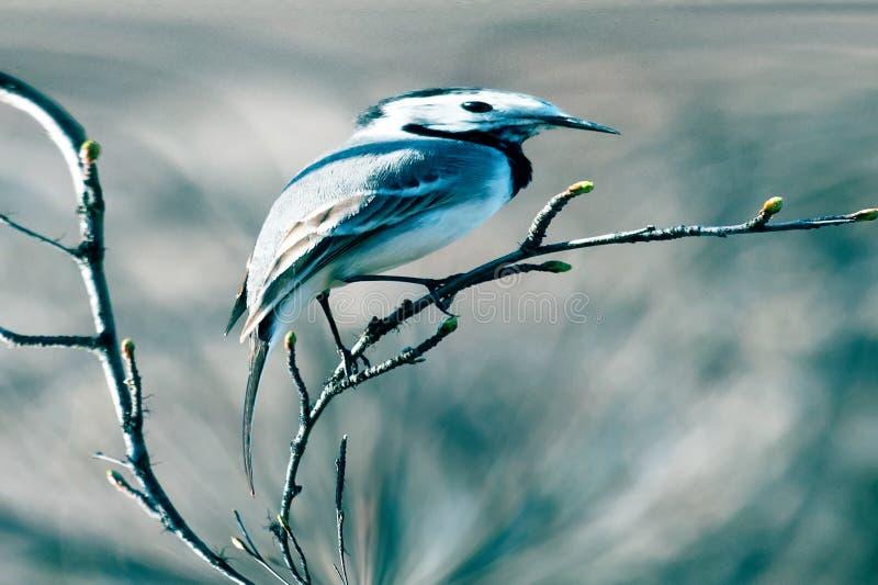 Birdie dans un miroir tordu images libres de droits
