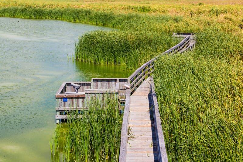 Birding Boardwalk. A birding Boardwalk amongst the grasses and marsh in Port Aransas, Texas royalty free stock images