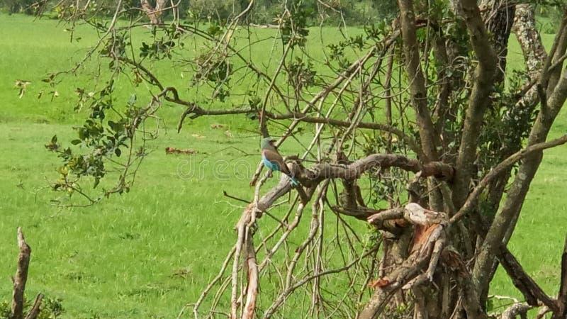 Birding stock photo