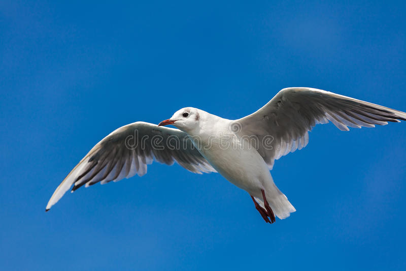 Birding van het overzees royalty-vrije stock fotografie