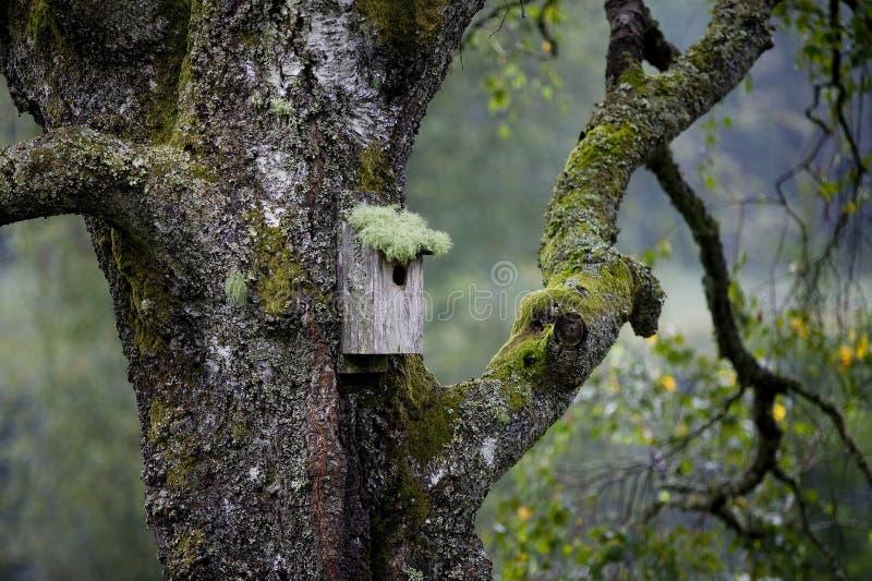 Birdnest en tree.JH imagen de archivo libre de regalías