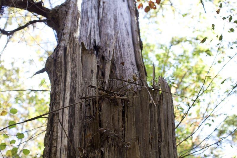 Birdnest en un árbol fotos de archivo