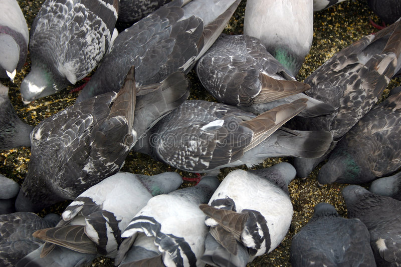 Download Birds stock image. Image of animals, birds, hunger, crowd - 8145