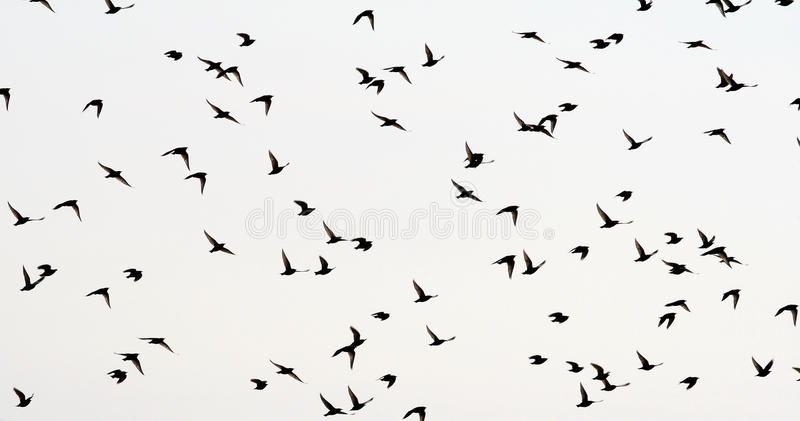 Download Birds Stock Images - Image: 14185714