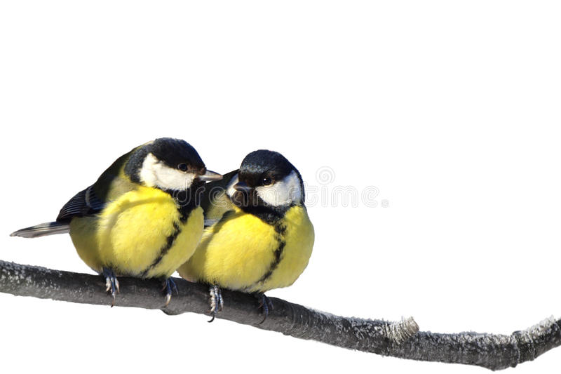 Download Birds Stock Images - Image: 18854574