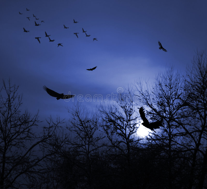 Birds. Dark blue Sunset with Birds and Trees silhouette royalty free stock photo