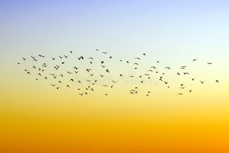 Download Birds stock photo. Image of wild, migration, cloud, flight - 22187644