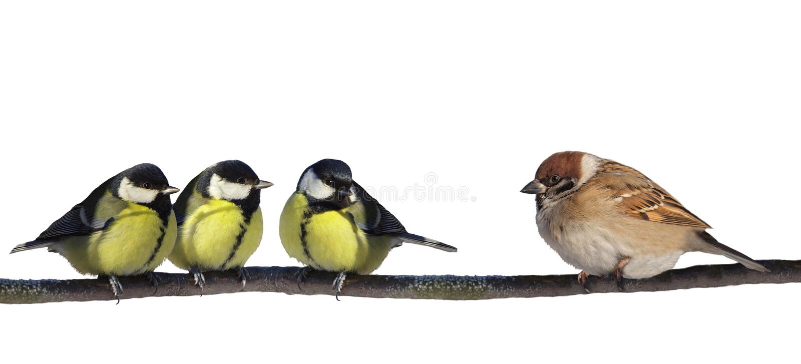 Download Birds Stock Images - Image: 23613944