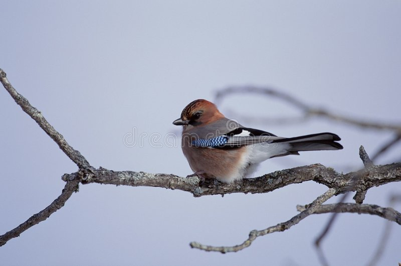 Download Birds stock photo. Image of close, feet, leaves, wing, green - 279772