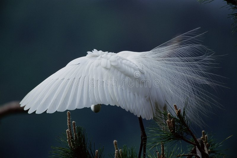 Download Birds stock image. Image of crane, webbed, wing, close - 279837