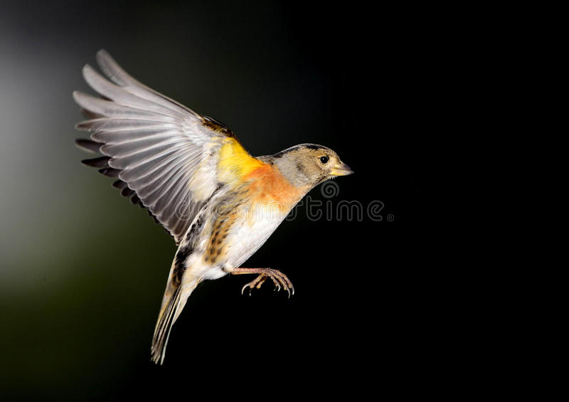 Birds royalty free stock photos