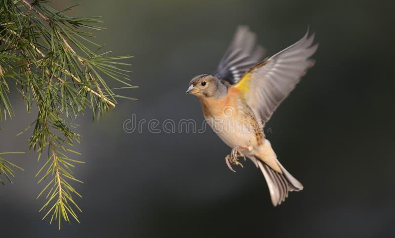 Download Birds, stock illustration. Image of design, wings, pattern - 28891029