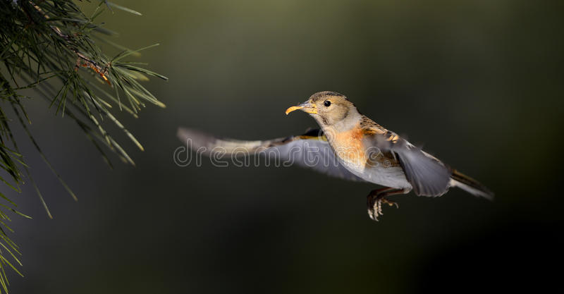 Download Birds stock image. Image of flapping, gesture, bird, wings - 29028947