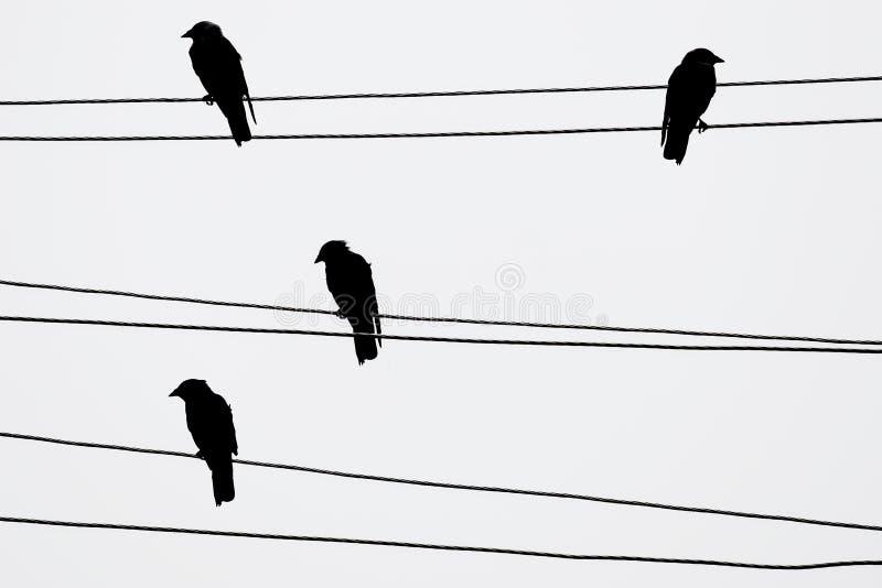 birds stock photo  image of bird  overhead  sitting  line