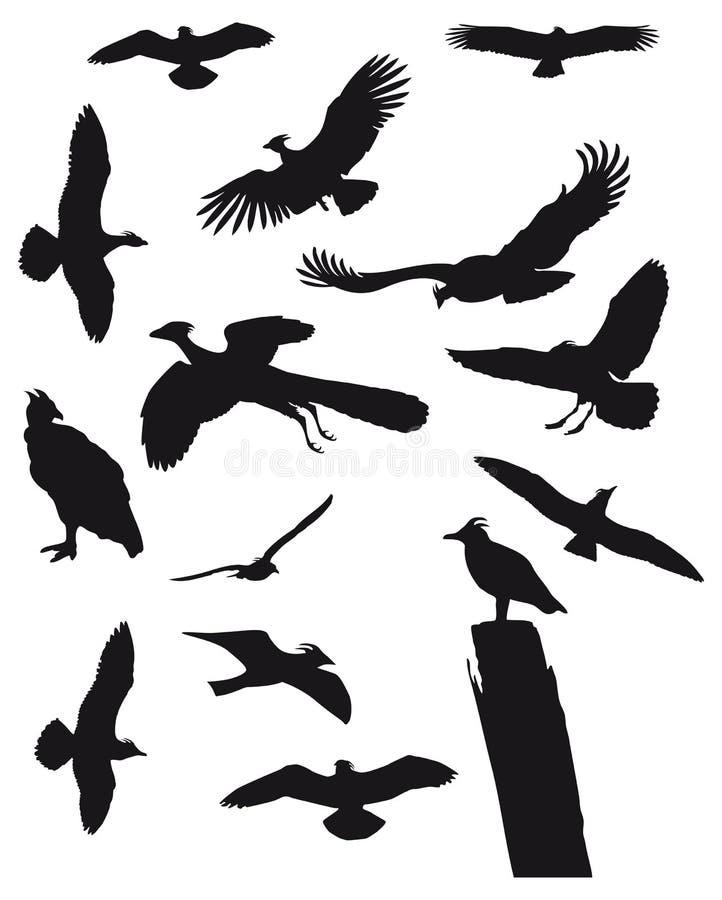 Free Birds Royalty Free Stock Photography - 4308207