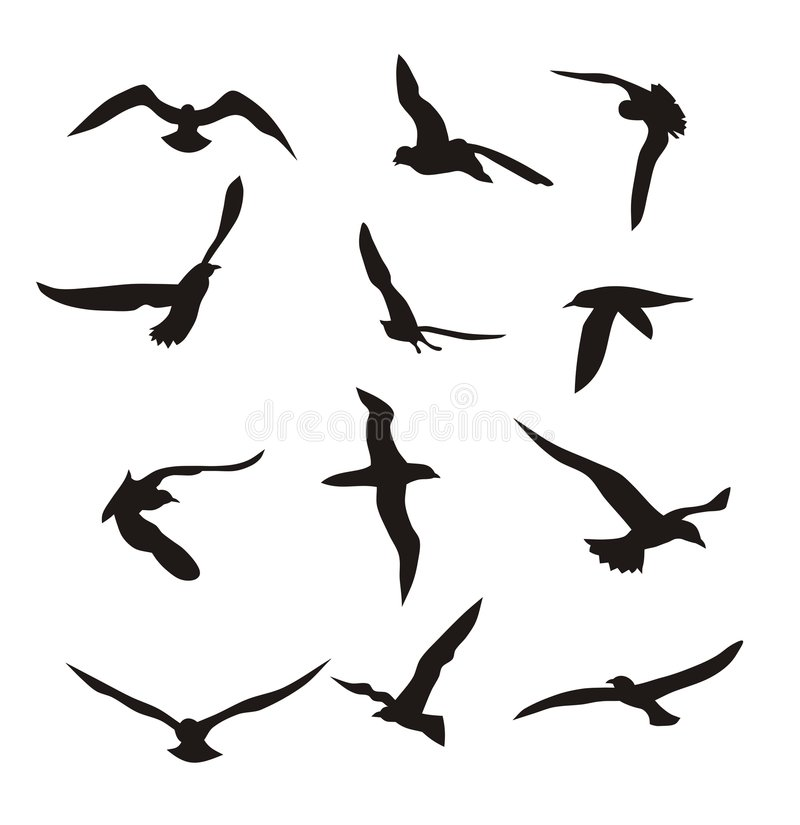 Birds. Abstract illustration of flying birds