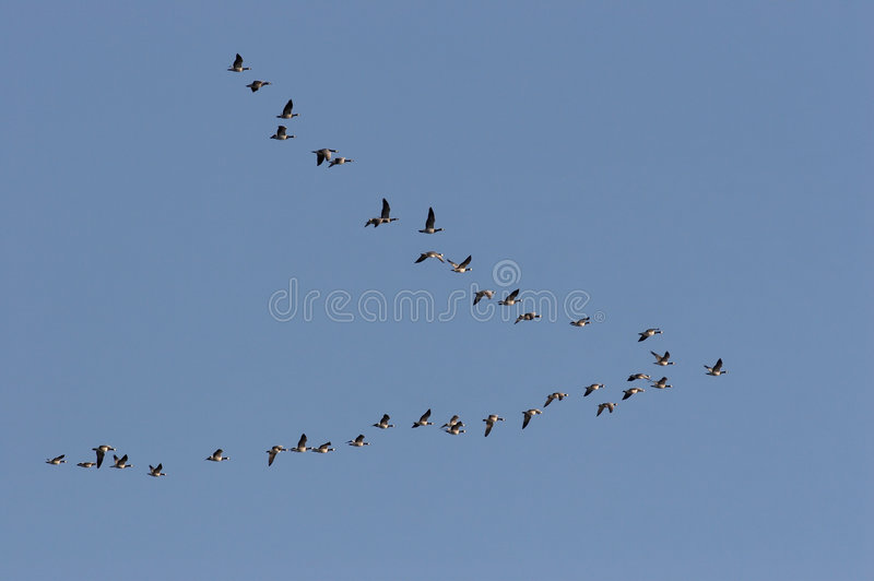 Birds stock images