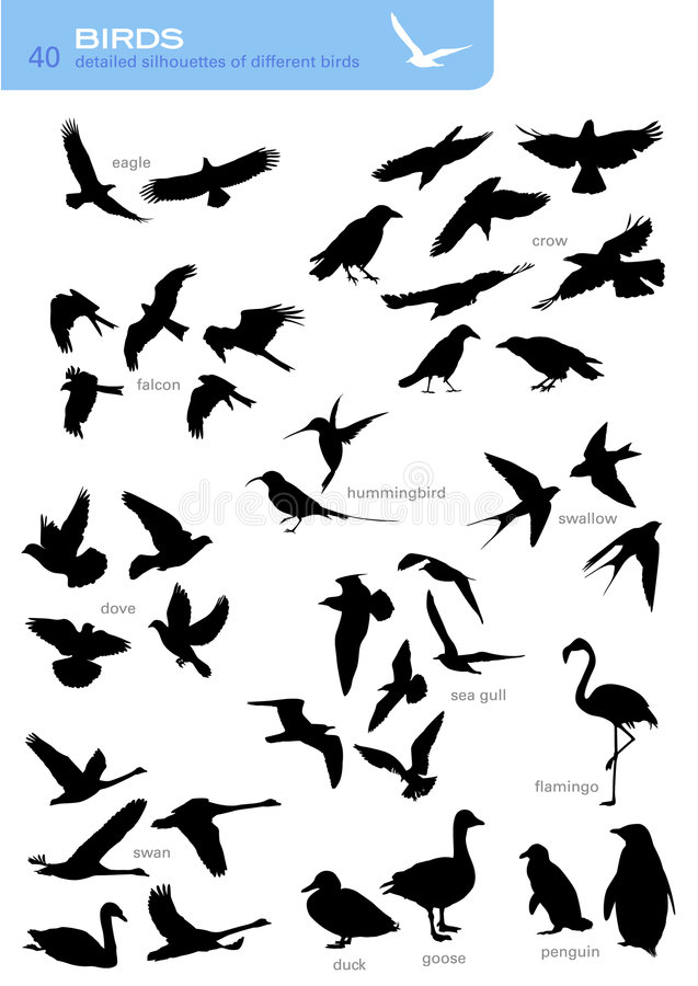 Birds. Collection of 40 detailed silhouettes of different birds