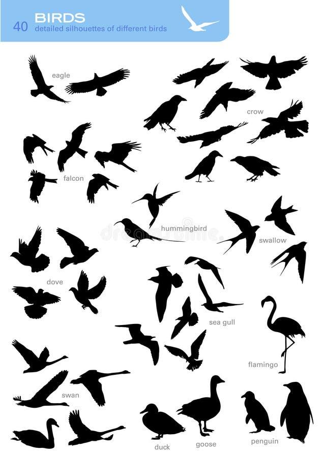 Free Birds Stock Photography - 8218612