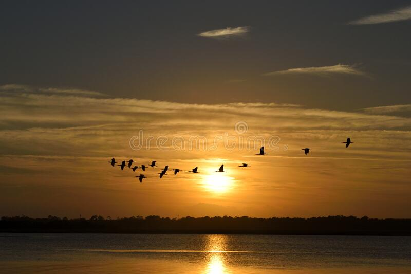 Birds above water surface at sunset stock photography