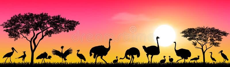 Birds of the African savannah stock illustration