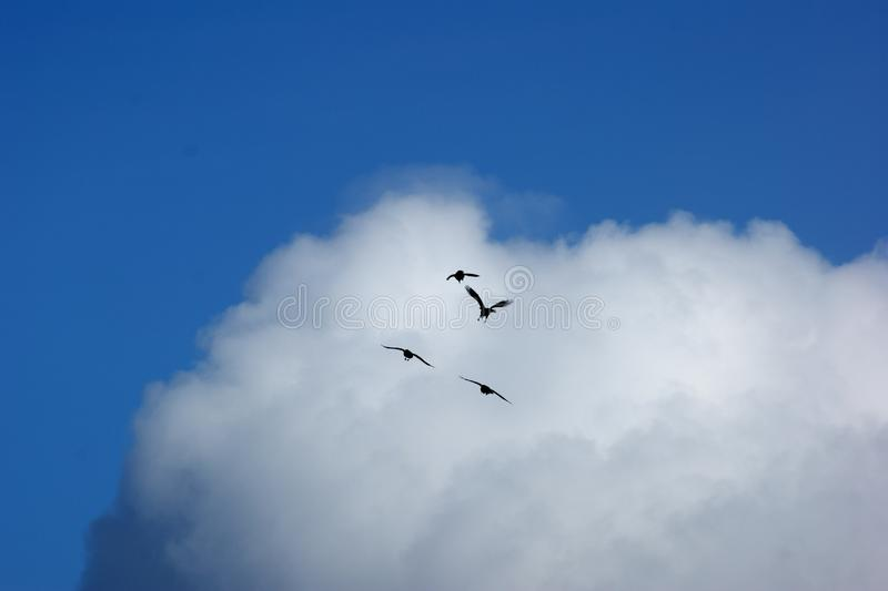 Birds against the sky and clouds royalty free stock photos