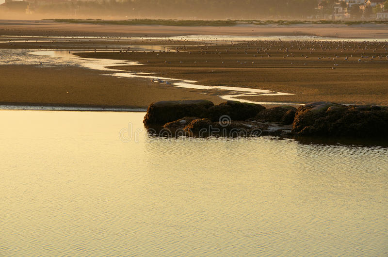 Download Birds On The Banks Of Sand Stock Photos - Image: 20425513